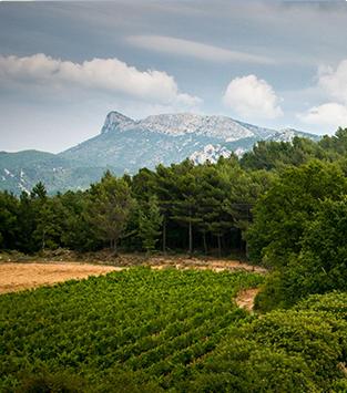 Nos vignerons de Provence