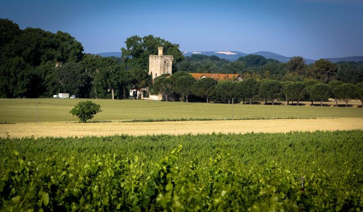 Domaine de la Tour Gatigne - Jerome Guibal