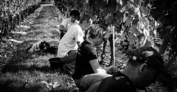 Winery4.jpg