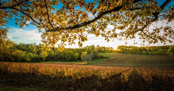 Winery3.jpg