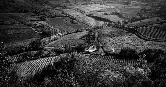 Winery2.jpg