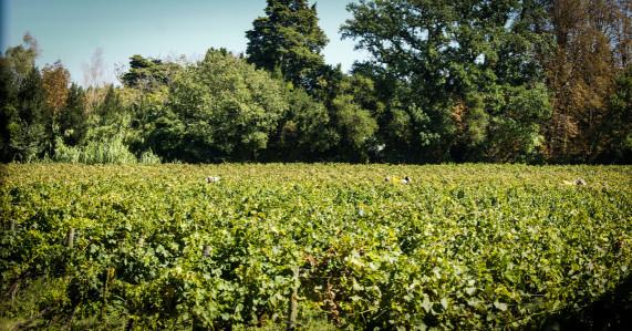 Winery4