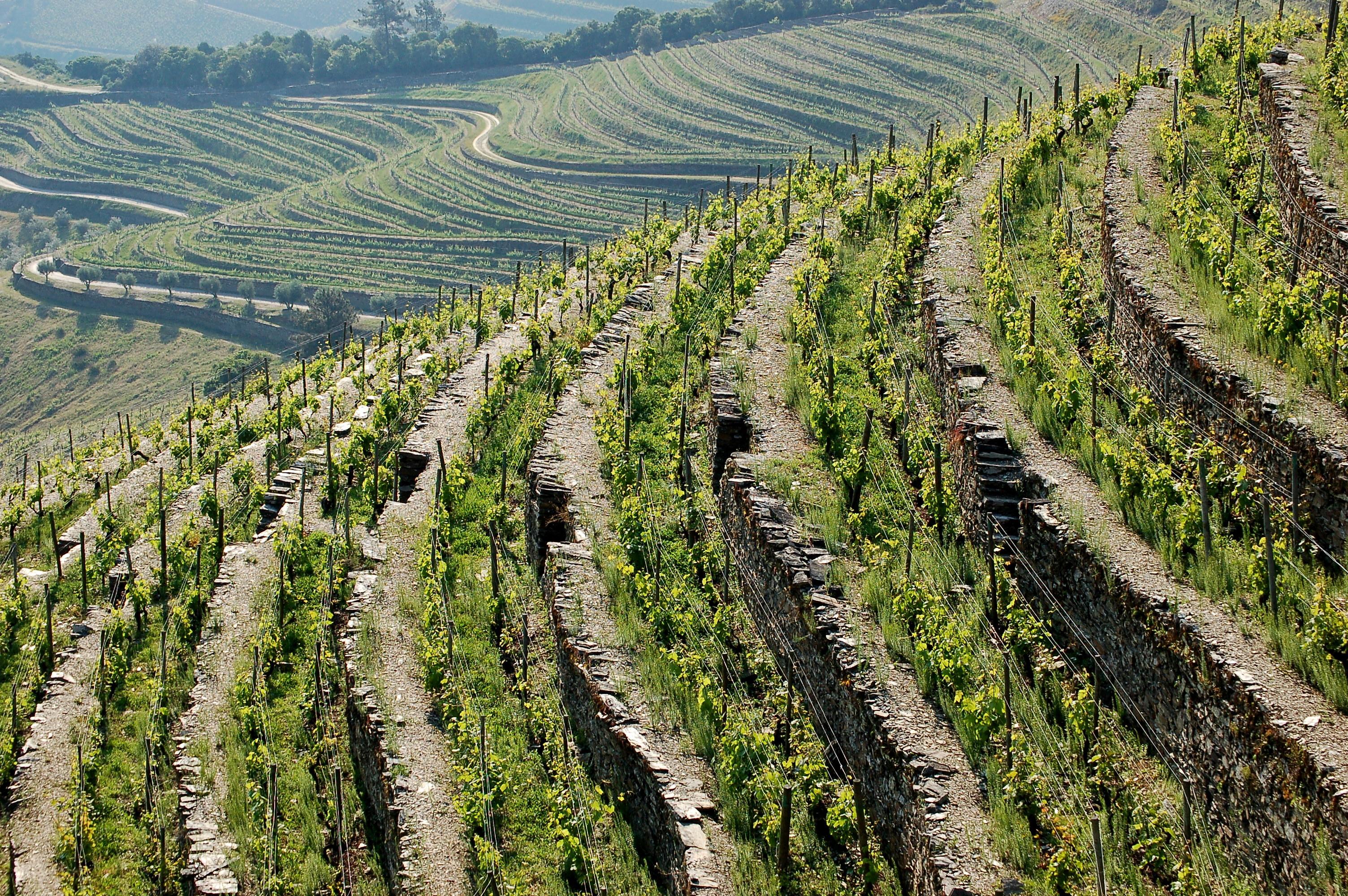 Ramos Pinto Quinta Urtiga | Wine.com