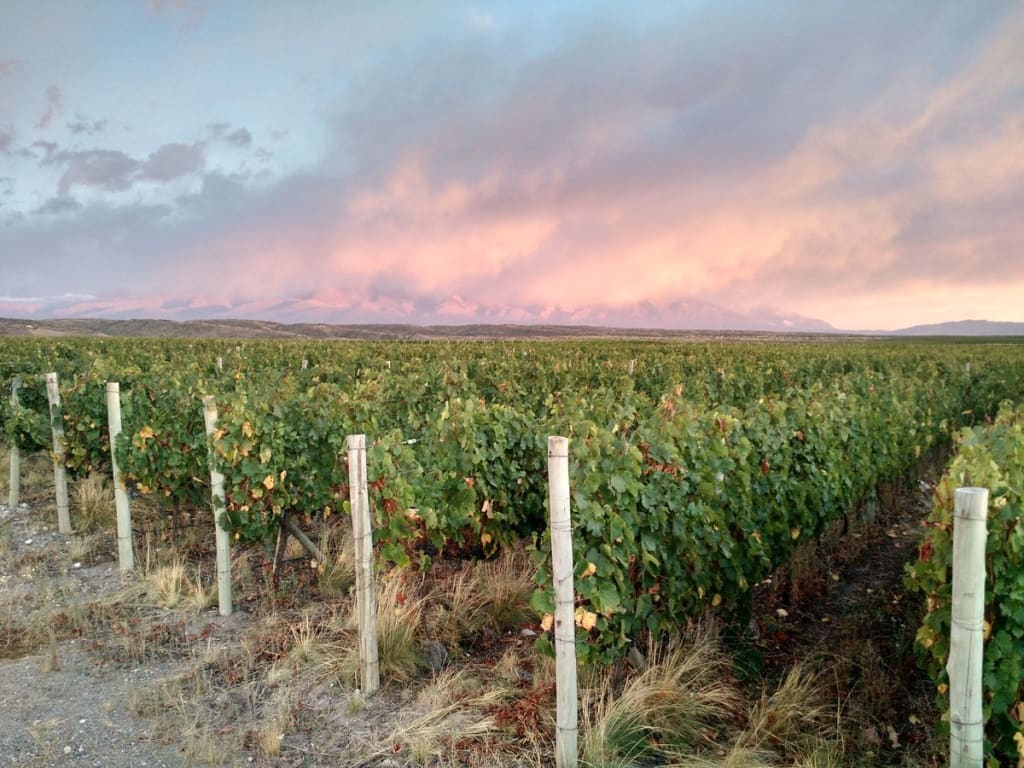 Inkarri by Proviva Estate Malbec 2018 | Wine.com