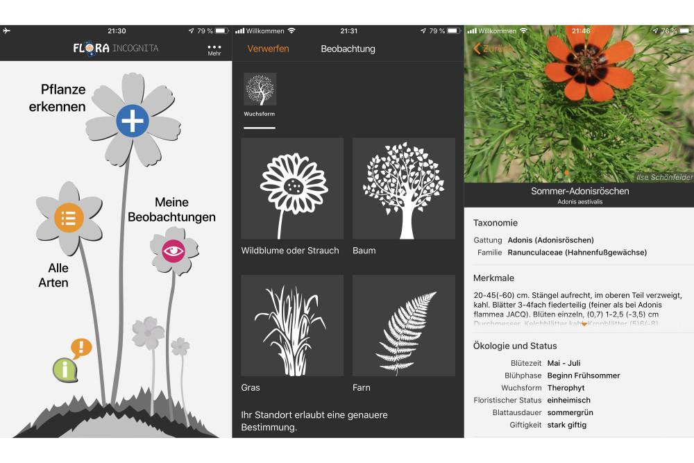 Flora Incognita, App, Smartphone, Pflanzenerkennung
