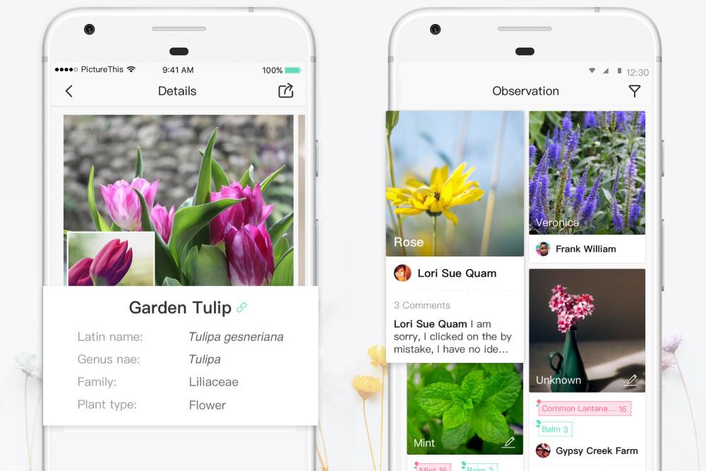PictureThis, App, Smartphone, Pflanzenerkennung