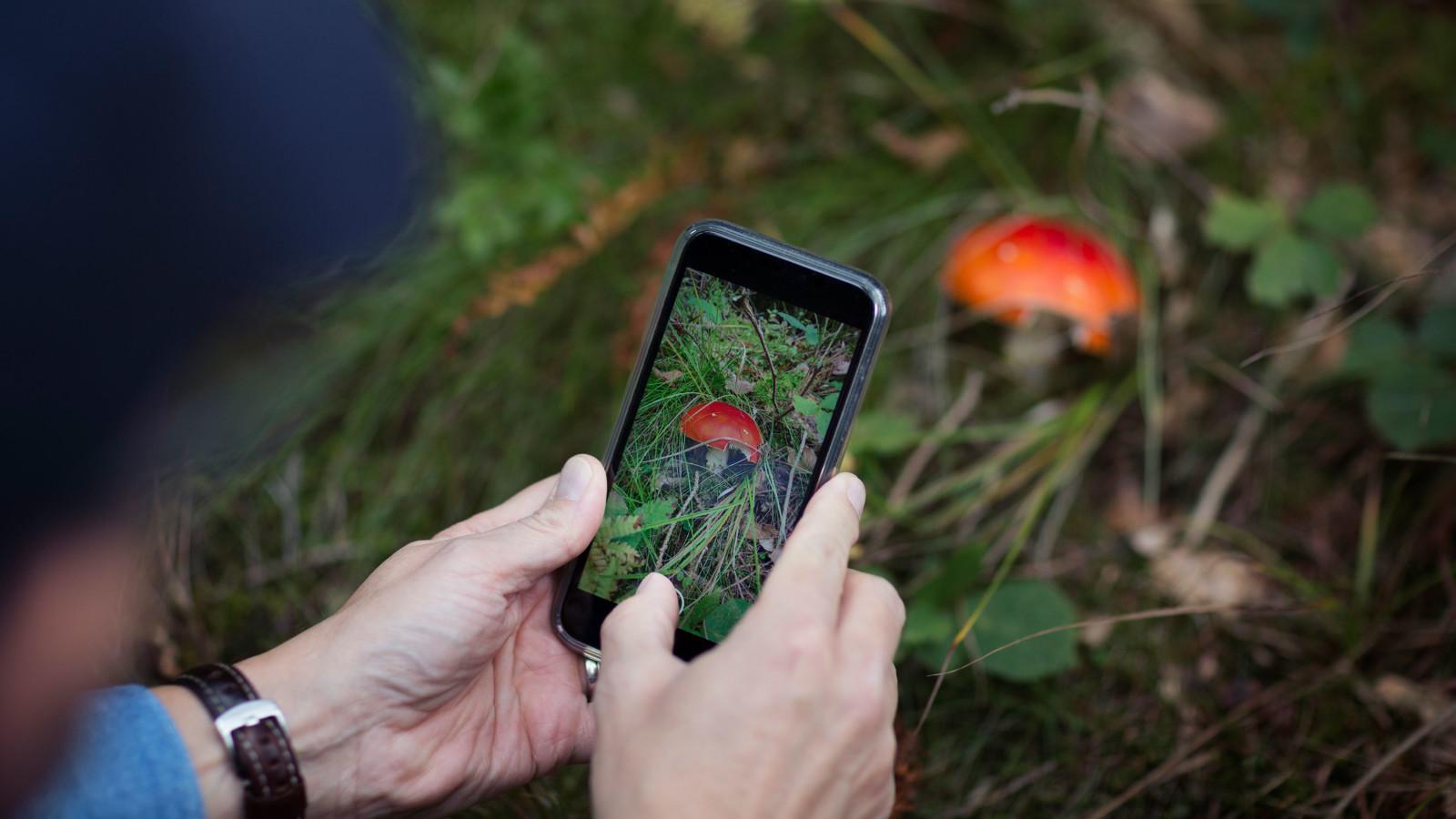 Smartphone, Handy, Pflanze, Pilz, erkennen, App, Pflanzenerkennung