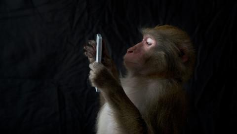 Wie Tiere Wissenschaft und Technologie inspirieren