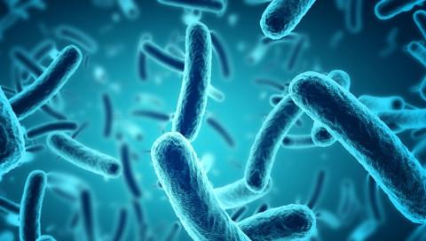 Dieser Wissenschaftler stellt Antibiotika-resistenten Keimen eine Falle