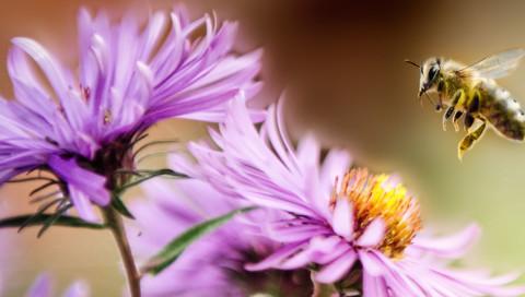 Drohnen mit Pferdehaar sollen den Job von Bienen übernehmen