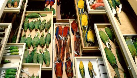 So sieht es aus, wenn das Smithsonian Natural History Museum alle Schubladen öffnet