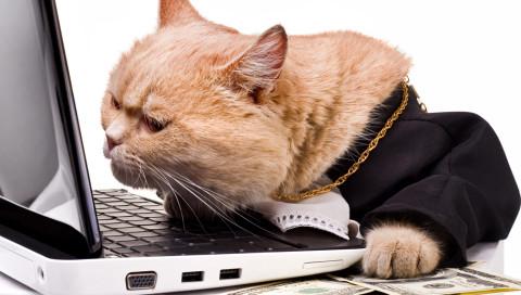 """""""Du wirst einfach nicht glauben, wo es bald keine Katzenvideos mehr gibt"""": die Macher von Heftig.co im Interview"""