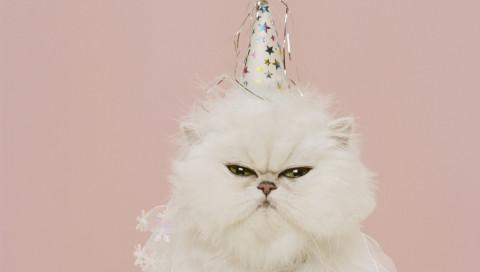 Wann das World Wide Web wirklich Geburtstag hat