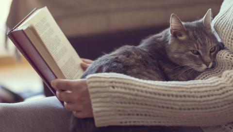 Die Joy For All Companion Pet Cat ist Hasbros Roboter-Haustier für ältere Menschen