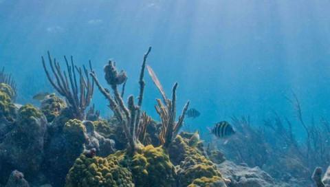 Wellenenergie könnte sterbende Korallenriffe retten