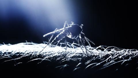 Genmücken nehmen den Kampf gegen Zika auf