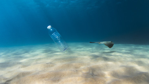 Für Fische riecht Plastik nach Nahrung