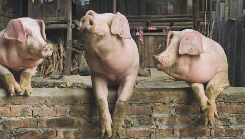 George Orwells Farm der Tiere wird zum Adventure-Game