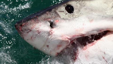 Eine kleine Box am Brett soll Surfer vor Hai-Attacken schützen