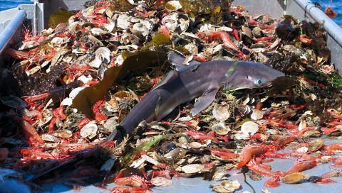 Die Überfischung der Meere soll nun mit der Blockchain bekämpft werden
