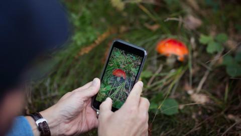 Die besten Apps zur Pflanzenerkennung