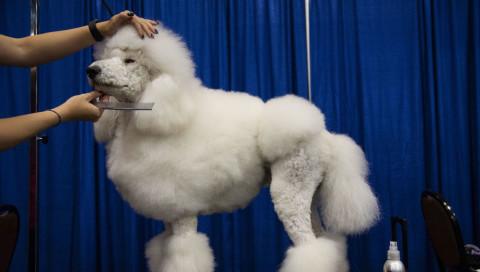 Der neue Beauty-Trend für Hunde: Glitzerhoden