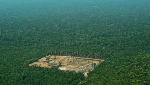 Wie eine KI den Regenwald retten soll