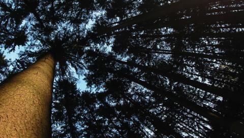 Dieser Blockchain-Wald forstet sich selbst auf!