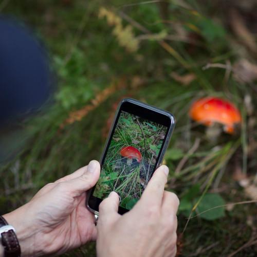 Praxistest : Die besten Apps zur Pflanzenerkennung