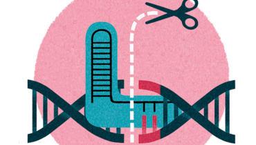 Die Genschere CRISPR erschafft den Menschen nach Maß