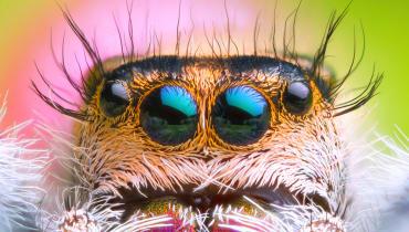 In diesem Labor tragen Spinnen Make-up und falsche Wimpern