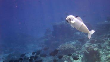 Wie Forscher mit Robo-Fischen undercover gehen