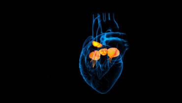 Ein Computerprogramm soll bei Herzklappen-OPs helfen