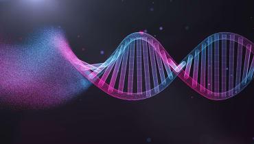 Der Schlüssel zu einem langen Leben liegt (fast) nicht in unseren Genen