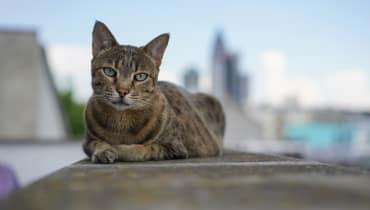 Die schärfsten Katzen-GIFs der Welt