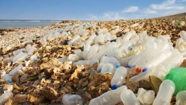 Fressen uns Bakterien und Raupen bald den Plastikmüll weg?