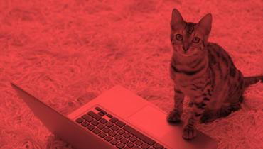 Warum es nicht lustig ist, dass Edward Snowden euch vor Katzen-Spam bewahren muss