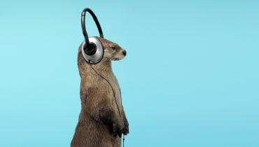 Wie zwei Berliner Startups den Podcast-Markt aufmischen wollen