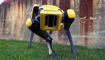 Forscher trainieren Roboter jetzt mit Hundevideos