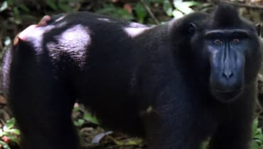 Der Streit um das Affen-Selfie geht in die letzte Runde