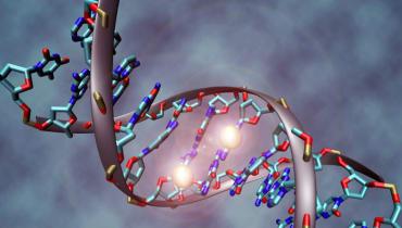 Wissenschaftler beschließen Richtlinien für die weltweite Forschung am menschlichen Genom