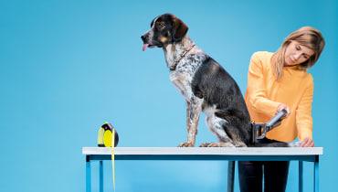 Kuck mal, wer da bellt: WIRED-Hunde testen tierische Gadgets auf Herz und Knochen