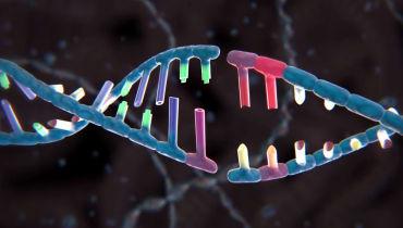 Forscher modifizieren zum ersten Mal die DNA von menschlichen Embryonen