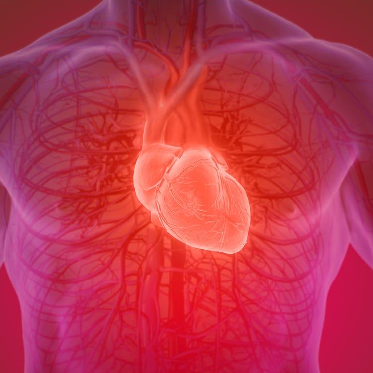 Ein Computerprogramm soll bei Herzklappen-OPs helfen   WIRED Germany