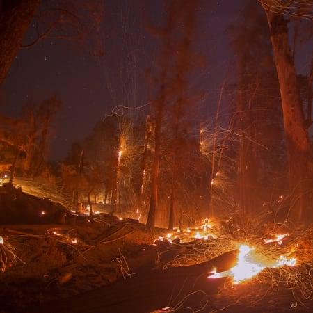 Waldbrände in Kalifornien: Elon Musk und Tesla sollen helfen | WIRED Germany