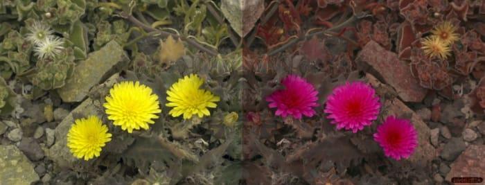 in diesen farben sehen bienen frettchen und andere tiere die welt wired germany. Black Bedroom Furniture Sets. Home Design Ideas