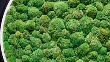 Grüner wird's nicht: die besten Pflanzen-Gadgets für Natur in der Wohnung