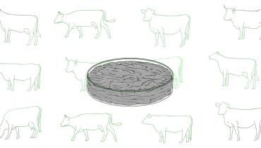 Wieso wir im Jahr 2029 trotz Labor-Hamburger immer noch Tiere schlachten werden