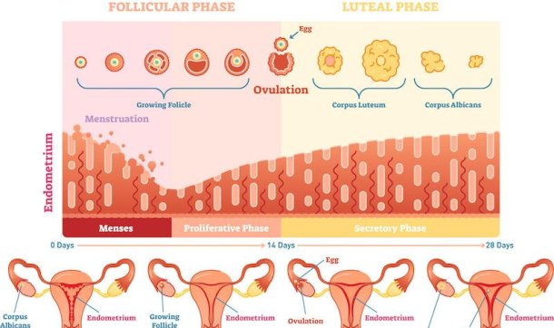 Women's Health and Fertility
