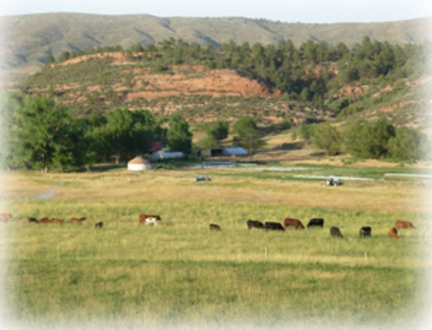 Buying Grassfed Beef Locally through Sunrise Ranch